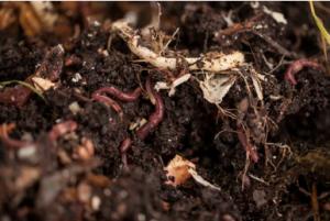 compost manure garden